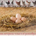 Смешанные породы птиц